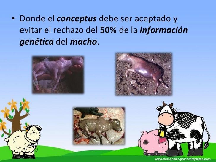 anabolicos en bovinos pdf