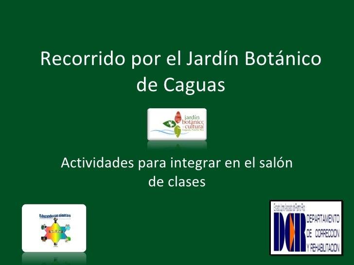 Recorrido por el jard n bot nico de caguas for Actividades en el jardin botanico de caguas