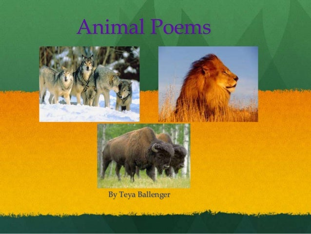 Animal Poems By Teya Ballenger