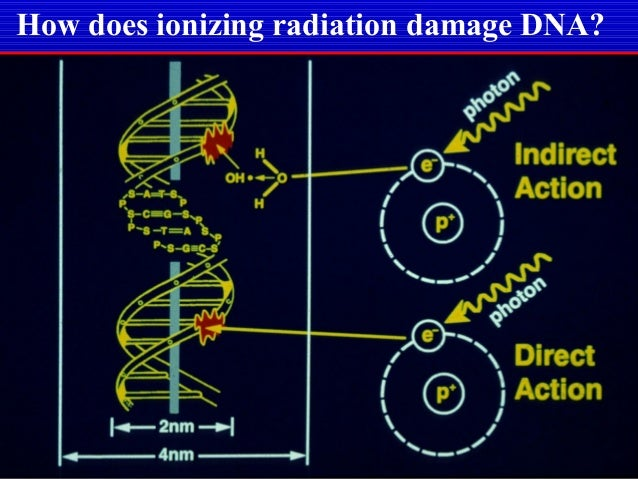 the effect of radiation in inducing mutation essay Introduction to skin cancer and its classification  mutation of p53 gene by uv radiation causes the  essay uk, introduction to skin cancer and its.