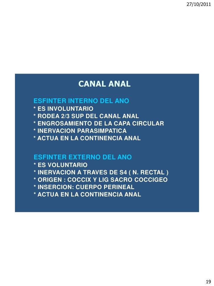 Recto,canal anal,diafragma pelviano,perine