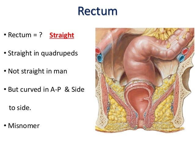 Rectum & anal canal