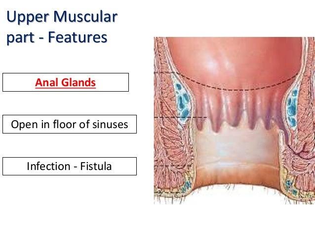 Overactive human anal glands