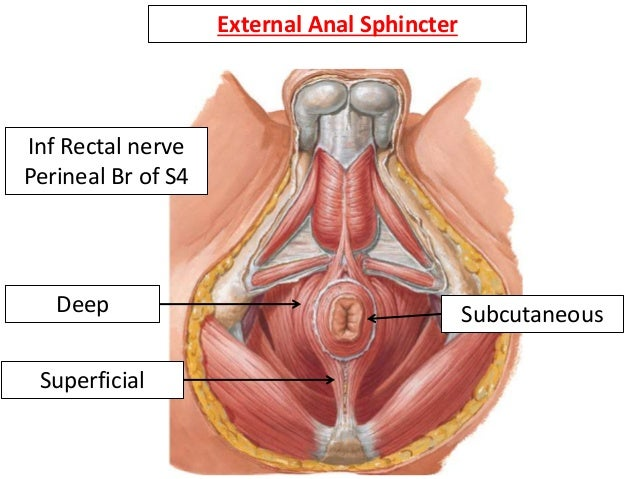 Rectum Anal Canal