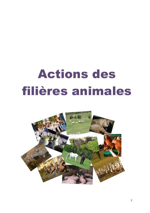 8  Filières ruminants et équidés  Ruminants  Contacts : Jean-Marc BECHE Jean-marc.beche@cne.asso.fr (CNE)  Luc MIRABITO lu...