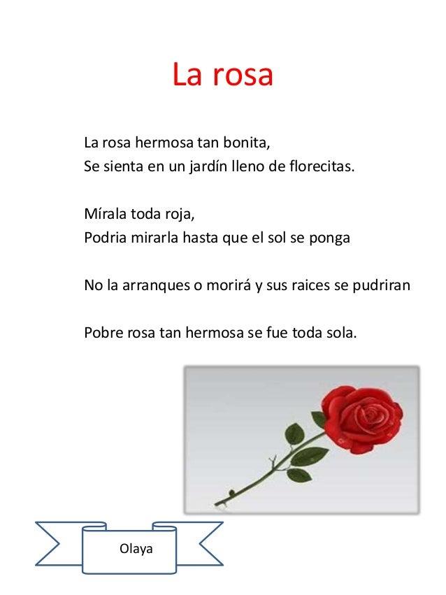 La rosa La rosa hermosa tan bonita, Se sienta en un jardín lleno de florecitas. Mírala toda roja, Podria mirarla hasta que...