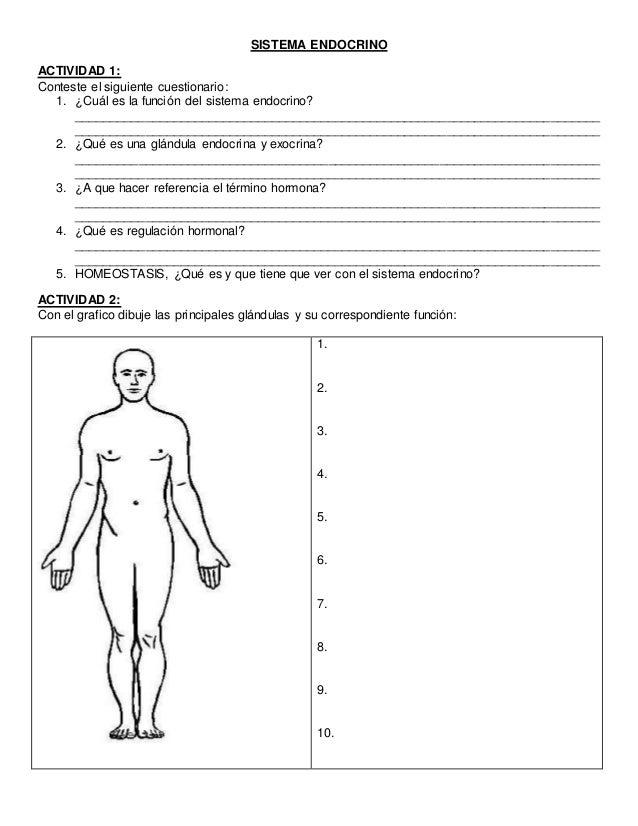 Fantástico El Sistema Endocrino Humano Hoja De Trabajo Elaboración ...