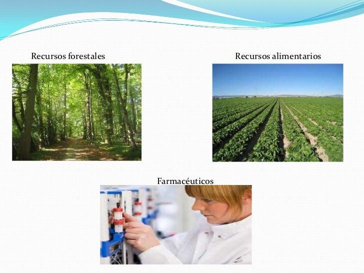Recursos forestales                   Recursos alimentarios                      Farmacéuticos