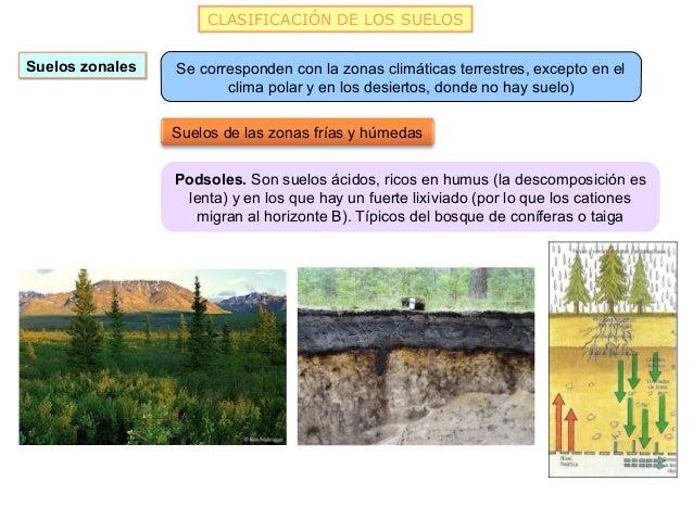 CLASIFICACIÓN DE LOS SUELOSSuelos zonales   Se corresponden con la zonas climáticas terrestres, excepto en el             ...