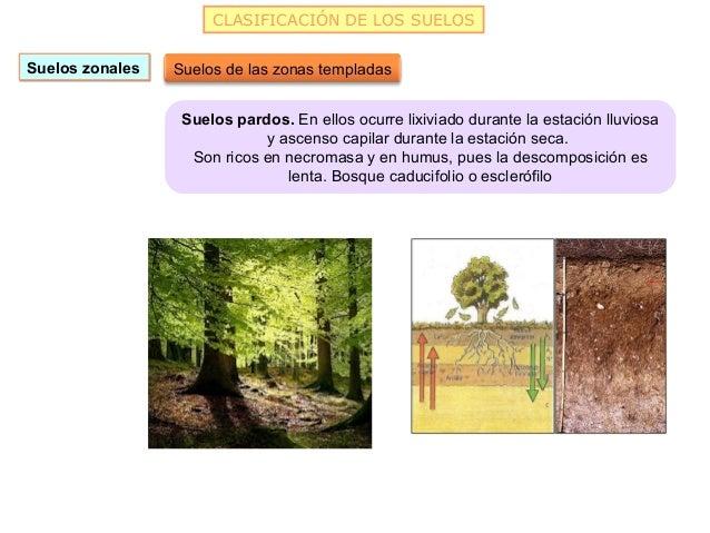 CLASIFICACIÓN DE LOS SUELOSSuelos zonales   Suelos de las zonas templadas                  Suelos pardos. En ellos ocurre ...