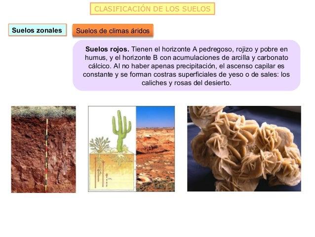 CLASIFICACIÓN DE LOS SUELOSSuelos zonales   Suelos de climas áridos                    Suelos rojos. Tienen el horizonte A...