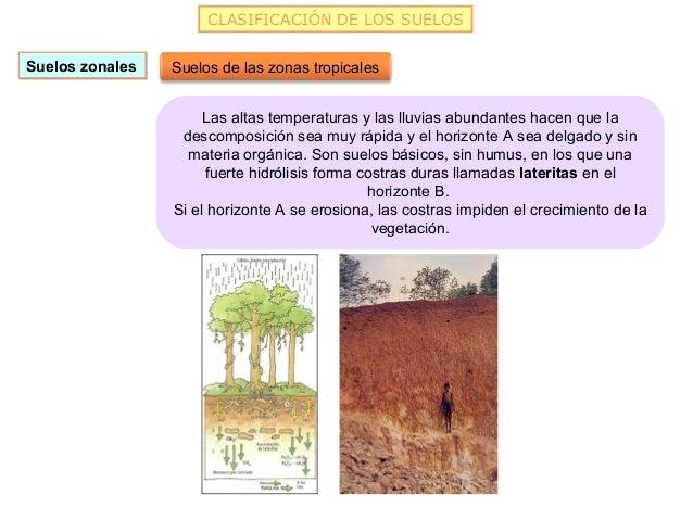 CLASIFICACIÓN DE LOS SUELOSSuelos zonales   Suelos de las zonas tropicales                      Las altas temperaturas y l...