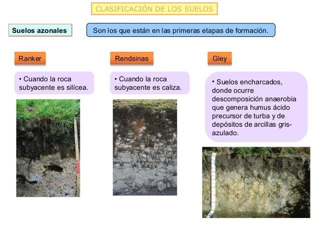 CLASIFICACIÓN DE LOS SUELOSSuelos azonales           Son los que están en las primeras etapas de formación. Ranker        ...