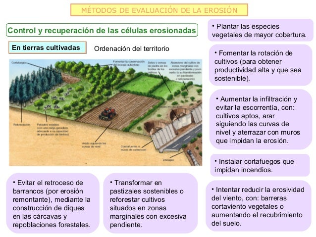 MÉTODOS DE EVALUACIÓN DE LA EROSIÓN                                                             • Plantar las especiesCont...