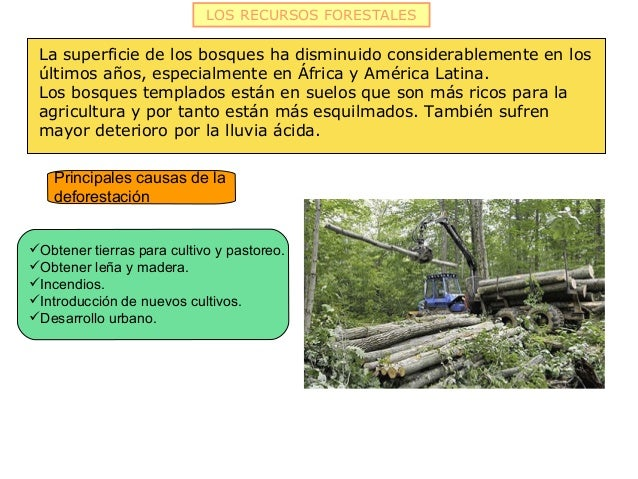 LOS RECURSOS FORESTALES La superficie de los bosques ha disminuido considerablemente en los últimos años, especialmente en...