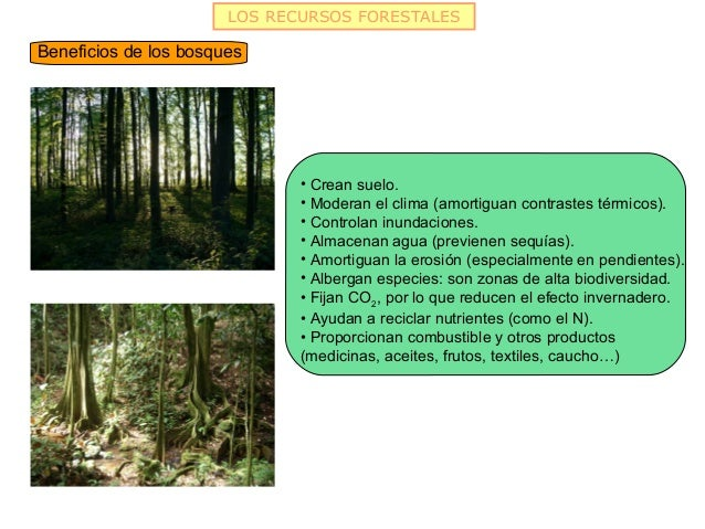 LOS RECURSOS FORESTALESBeneficios de los bosques                              • Crean suelo.                              ...