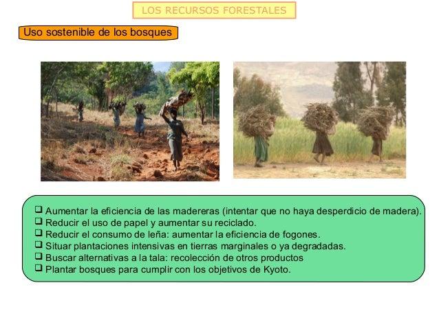 LOS RECURSOS FORESTALESUso sostenible de los bosques   Aumentar la eficiencia de las madereras (intentar que no haya desp...