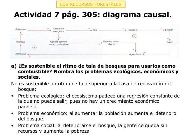 LOS RECURSOS FORESTALES Actividad 7 pág. 305: diagrama causal.a) ¿Es sostenible el ritmo de tala de bosques para usarlos c...