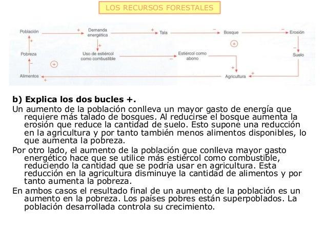 LOS RECURSOS FORESTALESb) Explica los dos bucles +.Un aumento de la población conlleva un mayor gasto de energía que   req...