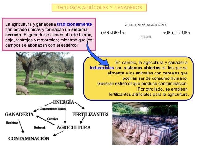 RECURSOS AGRÍCOLAS Y GANADEROSLa agricultura y ganadería tradicionalmente                     VEGETALES NO APTOS PARA HUMA...
