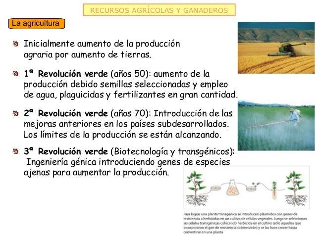 RECURSOS AGRÍCOLAS Y GANADEROSLa agricultura   Inicialmente aumento de la producción   agraria por aumento de tierras.   1...
