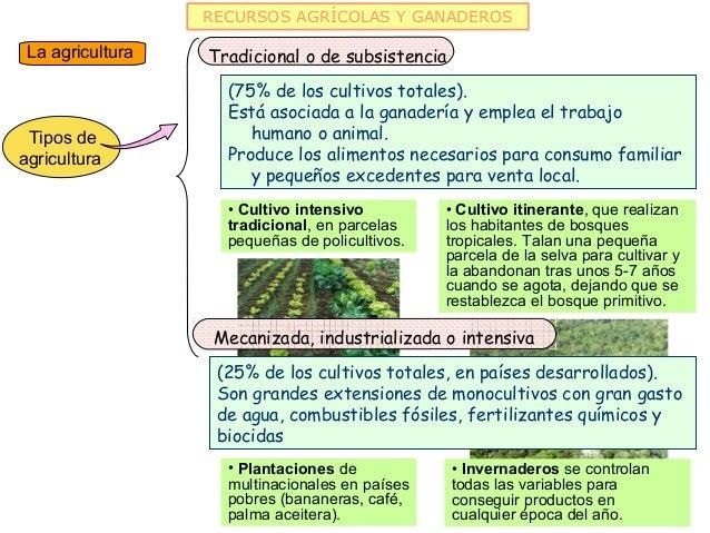 RECURSOS AGRÍCOLAS Y GANADEROS La agricultura   Tradicional o de subsistencia                    (75% de los cultivos tota...