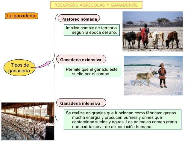 RECURSOS AGRÍCOLAS Y GANADEROSLa ganadería                 Pastoreo nómada                   Implica cambio de territorio ...