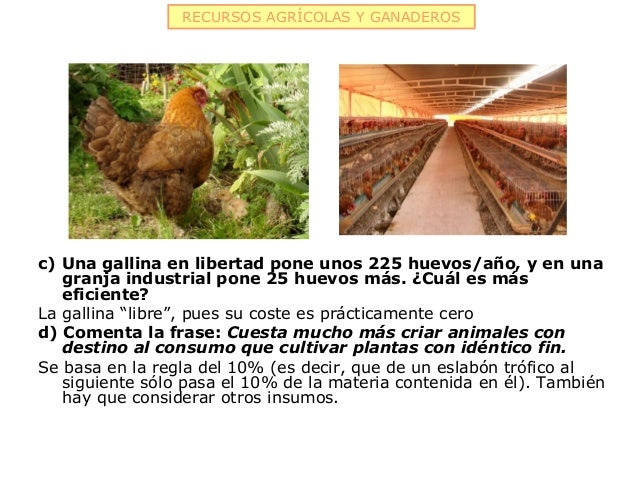 RECURSOS AGRÍCOLAS Y GANADEROSc) Una gallina en libertad pone unos 225 huevos/año, y en una   granja industrial pone 25 hu...