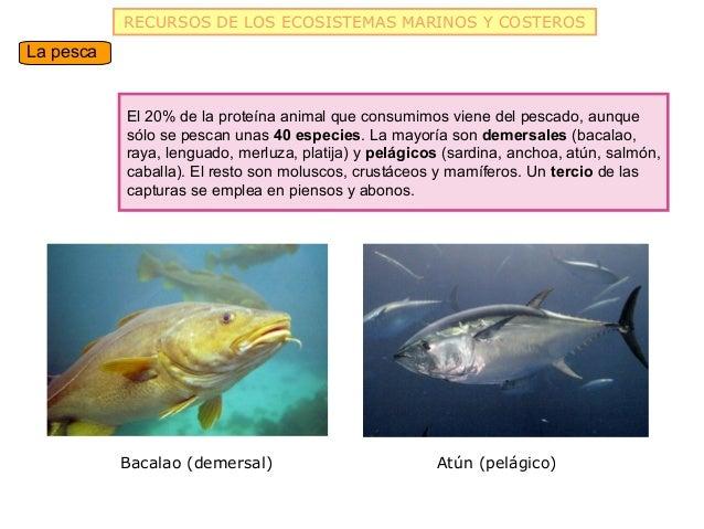 RECURSOS DE LOS ECOSISTEMAS MARINOS Y COSTEROSLa pesca           El 20% de la proteína animal que consumimos viene del pes...