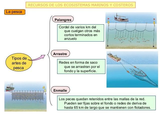 RECURSOS DE LOS ECOSISTEMAS MARINOS Y COSTEROSLa pesca                        Palangres                           Cordel d...