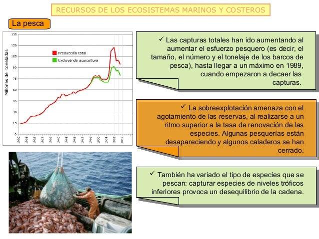 RECURSOS DE LOS ECOSISTEMAS MARINOS Y COSTEROSLa pesca                                   Las capturas totales han ido aum...