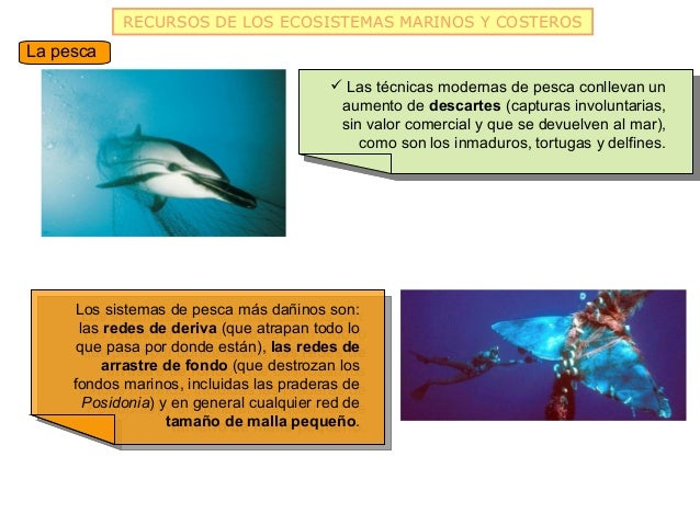 RECURSOS DE LOS ECOSISTEMAS MARINOS Y COSTEROSLa pesca                                          Las técnicas modernas de ...