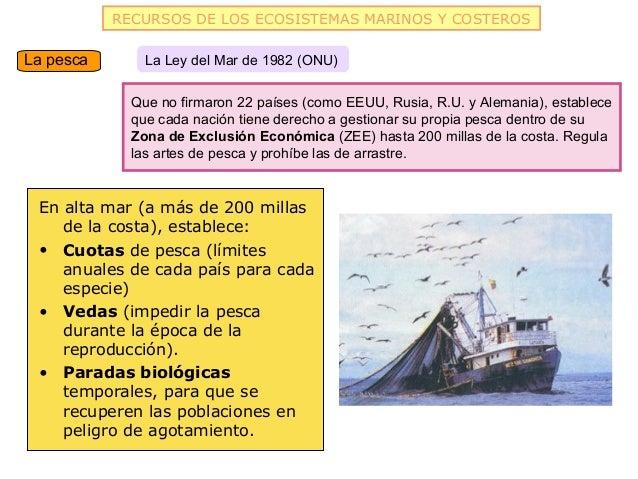 RECURSOS DE LOS ECOSISTEMAS MARINOS Y COSTEROSLa pesca       La Ley del Mar de 1982 (ONU)             Que no firmaron 22 p...