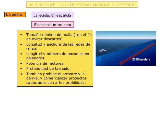 RECURSOS DE LOS ECOSISTEMAS MARINOS Y COSTEROSLa pesca      La legislación española               Establece límites para  ...
