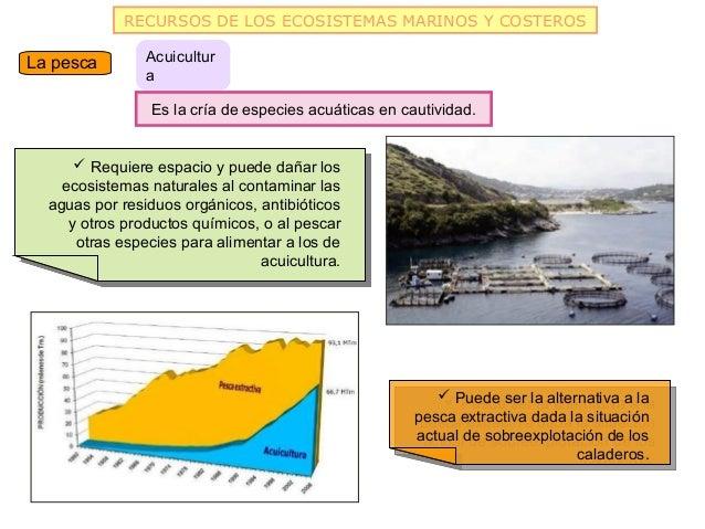 RECURSOS DE LOS ECOSISTEMAS MARINOS Y COSTEROSLa pesca        Acuicultur                a                Es la cría de esp...