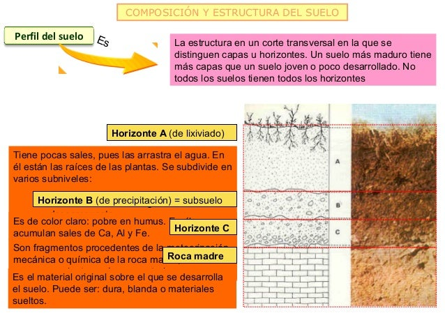 COMPOSICIÓN Y ESTRUCTURA DEL SUELOPerfil del suelo   Es                 La estructura en un corte transversal en la que se...