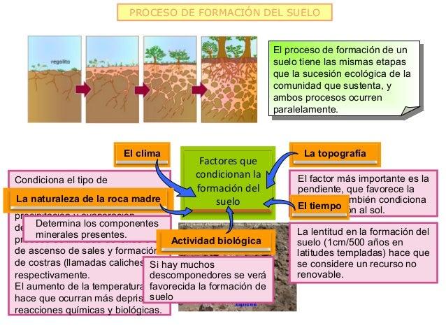 Recursos de la biosfera 2013 for Proceso de formacion del suelo