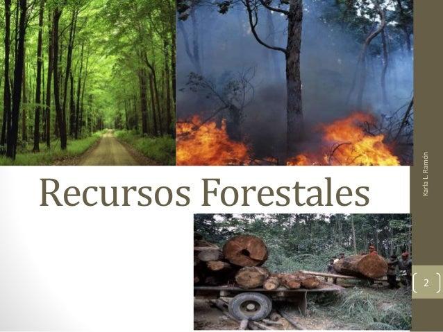 Recursos forestales por karla l ram n for Importancia de los viveros forestales