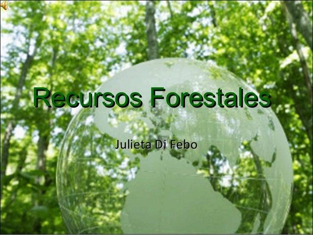 Recursos forestales for Importancia de los viveros forestales