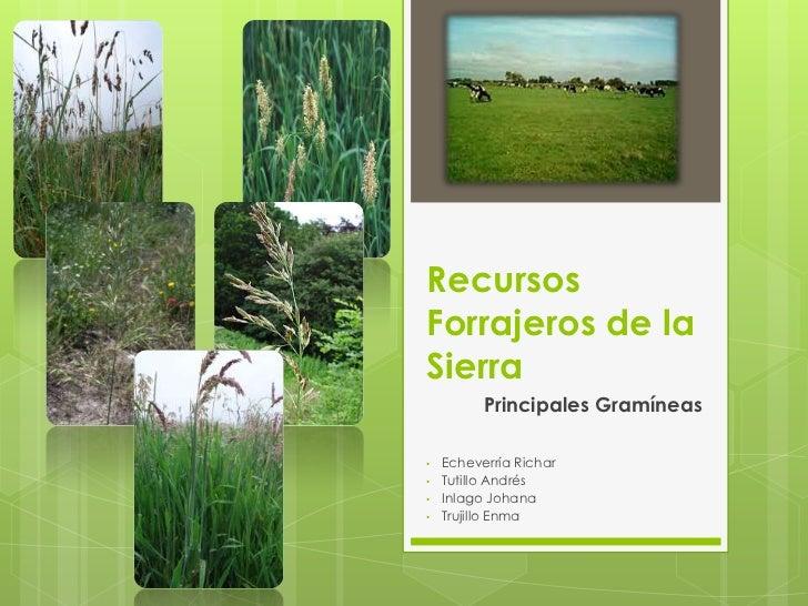 RecursosForrajeros de la Sierra<br />Principales Gramíneas<br /><ul><li>Echeverría Richar