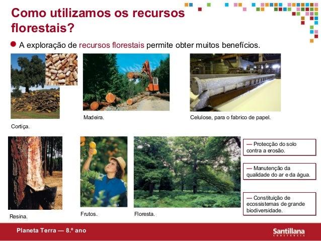 Como utilizamos os recursosflorestais?A exploração de recursos florestais permite obter muitos benefícios.Cortiça.Madeira....