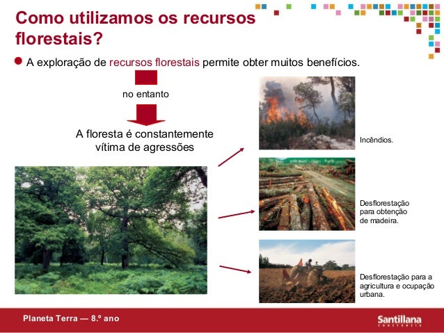 A floresta é constantementevítima de agressõesno entantoIncêndios.Desflorestaçãopara obtençãode madeira.Desflorestação par...