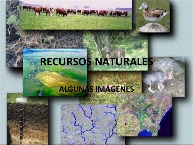 RECURSOS NATURALESALGUNAS IMÁGENES