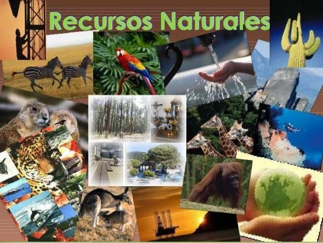 Oct 04, · Los recursos naturales son también las materias primas. Ya que se suponen que estas son recursos naturales, las cuales no han sufrido de ninguna transformación. Espero que mi comentarío te sirva de algo inés pez la verdad está muy difícil tu pregunta.