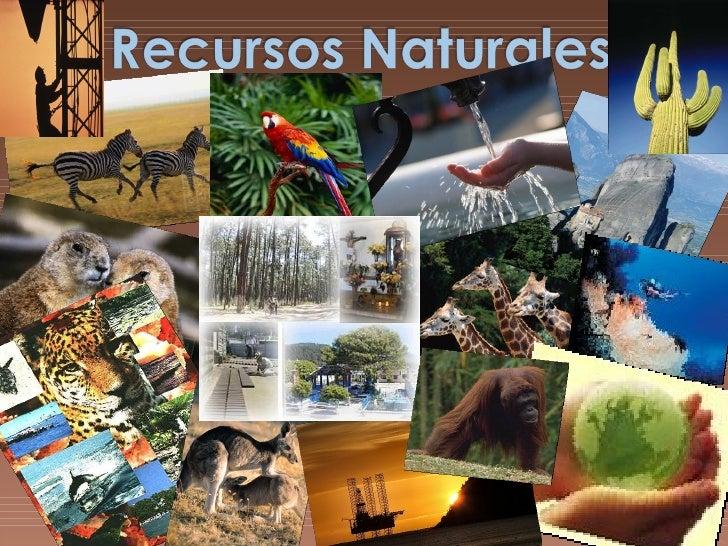    La flora y la fauna se ven muy afectados en estos tiempos no     solo por la erosión, la tala, la caseria, a explotaci...