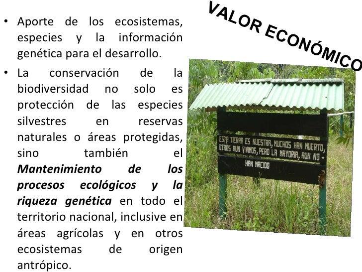 VALOR ECONÓMICO <ul><li>Aporte de los ecosistemas, especies y la información genética para el desarrollo.  </li></ul><ul><...