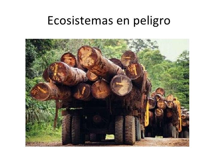 Ecosistemas en peligro