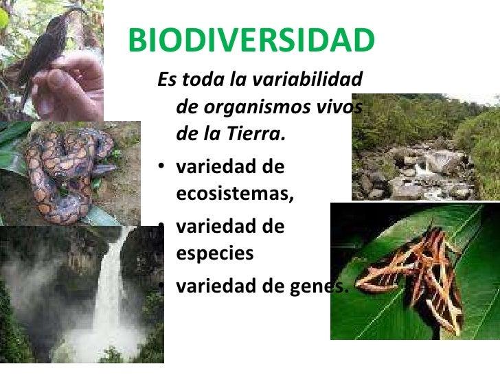 BIODIVERSIDAD <ul><li>Es toda la variabilidad de organismos vivos de la Tierra.  </li></ul><ul><li>variedad de ecosistemas...