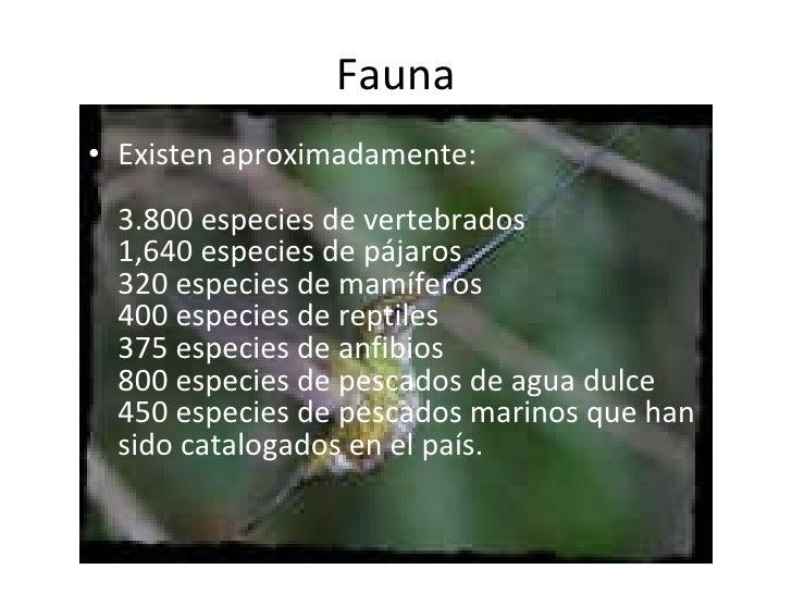 Fauna <ul><li>Existen aproximadamente: 3.800 especies de vertebrados 1,640 especies de pájaros 320 especies de mamíferos...