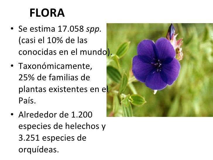 FLORA <ul><li>Se estima 17.058  spp.  (casi el 10% de las conocidas en el mundo). </li></ul><ul><li>Taxonómicamente,  el  ...
